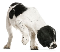 Sniffing Dogs Can Detect Malaria, Image: Eric Isselee/Shutterstock.com