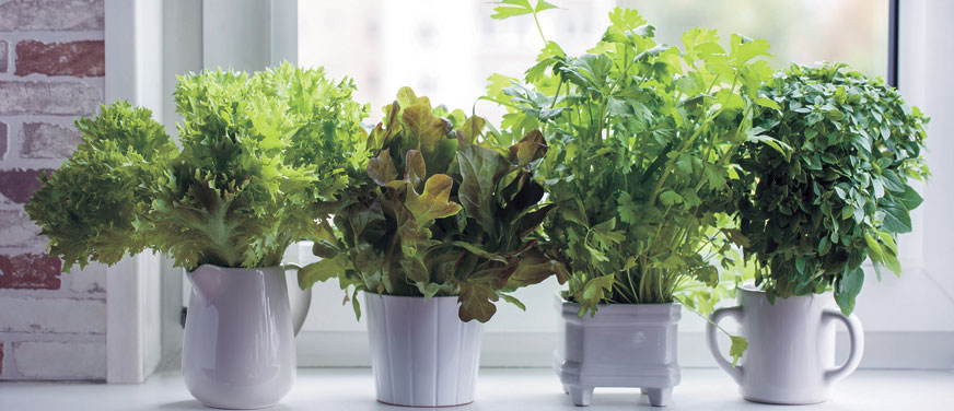 Indoor Edible Gardening, shintartanya/AdobeStock.com