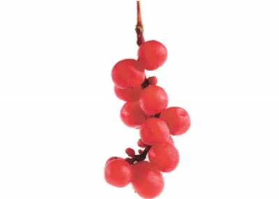 Improve Muscle Strength with Schisandra